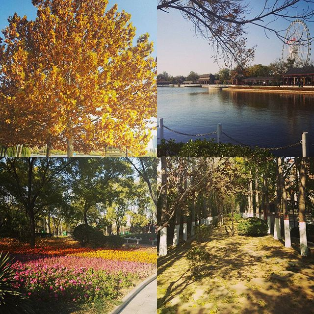Welcome back my best friends ...blue sky, wind and fresh air. I know you probably won't be staying for long so I really enjoyed and appreciated your company today#tianjin #expatlife #china #autumnleaves #bluesky
